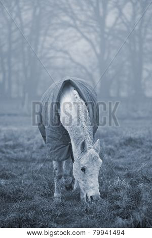 Old White Horse Grazing On A Misty Winter Day. Cyanotype