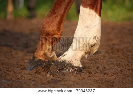 Close Up Of Chestnut Horse Hooves