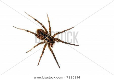 Spider in my house