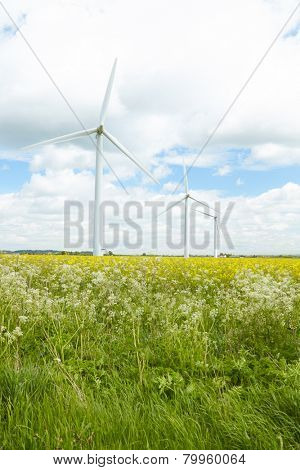 Group Of Wind Turbines In Field Of Oil Seed Rape