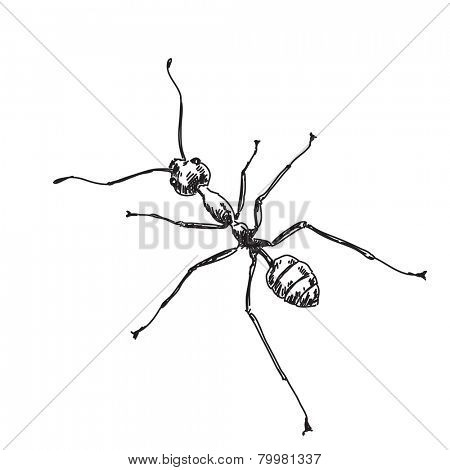 Sketch of ant Hand drawn vector illustration