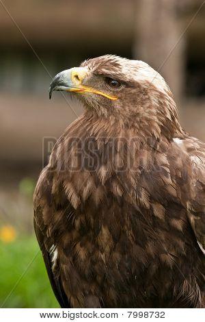 Adler auf einem grünen Holzplatte