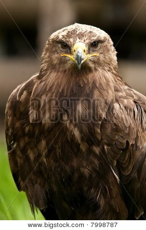 Eagle On A Green Wooden Plate