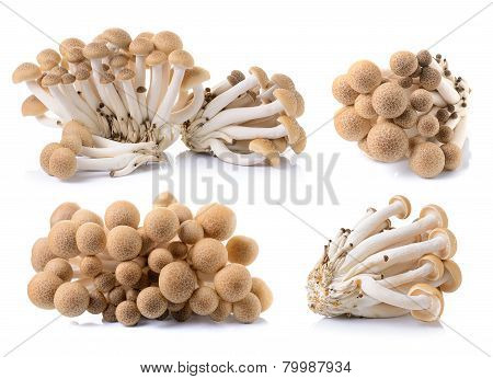 Brown Beech Mushroom Isolated On White Background