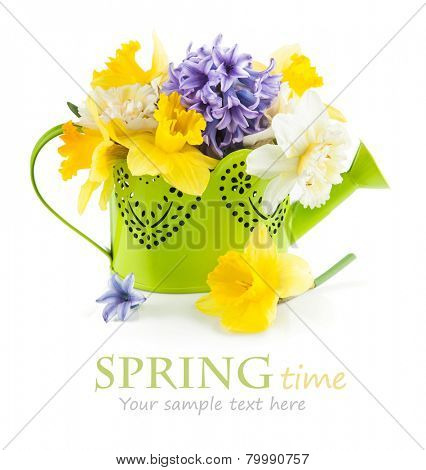 Spring flowers in green watering can. Isolated on white background