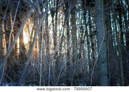 Sundown In Winter Forest