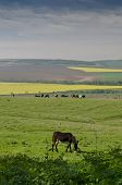 pic of grease  - View of a donkey greasing in the fields - JPG