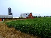 Abandoned Dairy Farm with Crop of Soybeans poster