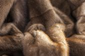 stock photo of mink  - Product from fur of a pastel mink - JPG