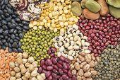 foto of legume  - legume abstract  - JPG