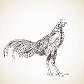 picture of roosters  - Sketch of asian rooster - JPG