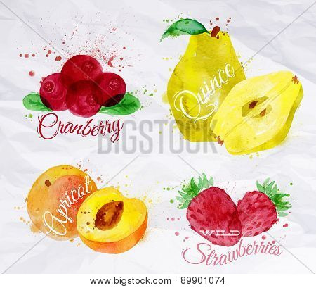 Fruit watercolor cranberry, quince, apricot, wild strawberries