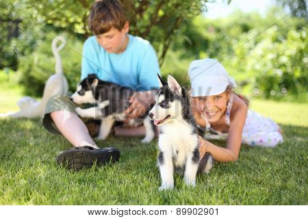 Happy boy and girl playing with two puppies husky on the grass