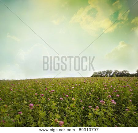 Green field and  sky with light clouds