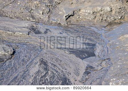 Gray Marsh Soil