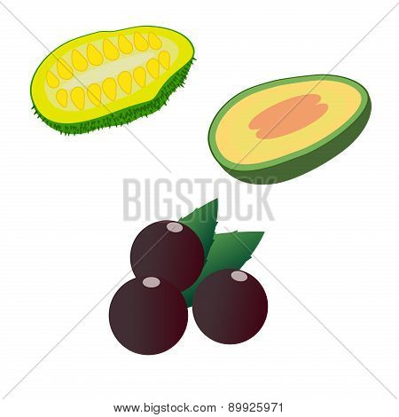 Jackfruit, Feijoa And Acai Isolated On White Background. Editable And Design Suitable Vector Illustr