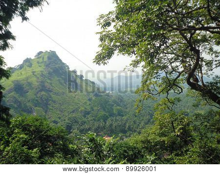sight of mountains covered with trees