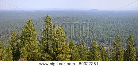 Landscape Of A Dense Forest In Central Oregon
