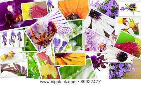 Various Colorful Flowers Photo Collage