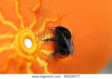Bumble Bee Sitting On A Bright Orange Cloth With Sun Pattern.