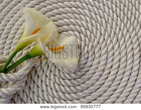 Beautiful white Calla lily over rope