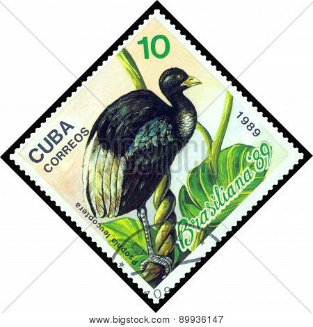 Vintage  Postage Stamp.  Bird Psopnia Leucoptera.