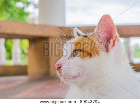 Moody Cat