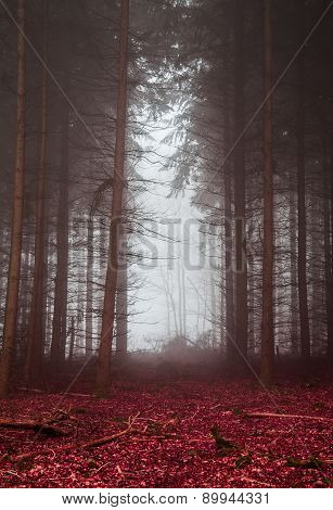 Dark Forest In The Fog With Red Foliage