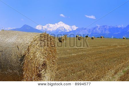 Summer Hay With Mount Blanc