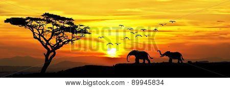 Elephants in the field