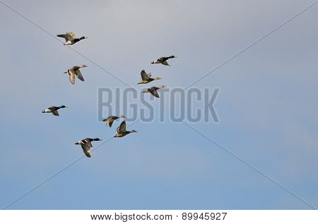 Flock Of Mallard Ducks Flying In A Cloudy Sky