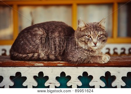 Gray Cat Resting