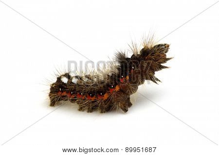 caterpillar isolated on a white background
