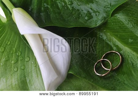 Calla Lily And Wedding Rings