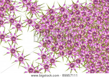 Abstract Red Purple Unknown Flowers Background