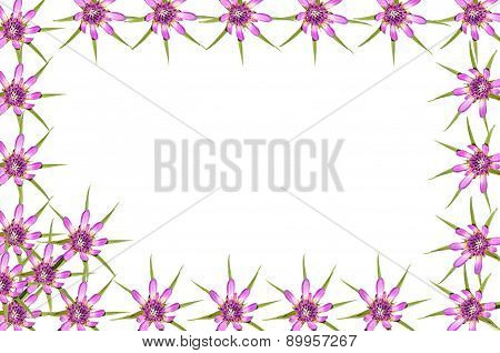 Abstract Red Purple Unknown Flowers Frame With White Copy Space Background