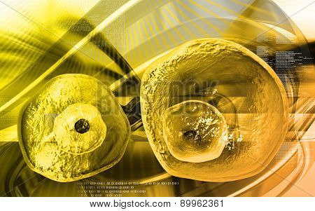 Ovum cell