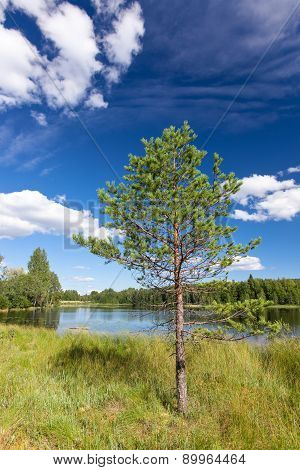 Sunny landscape from finland