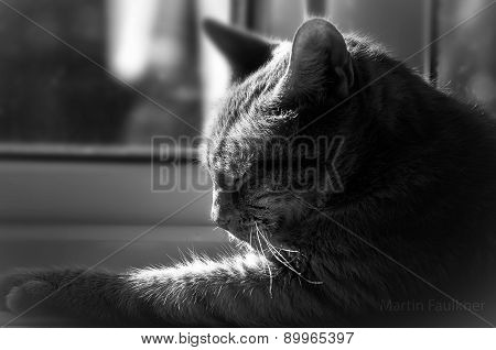 Sleeping Cat In Window