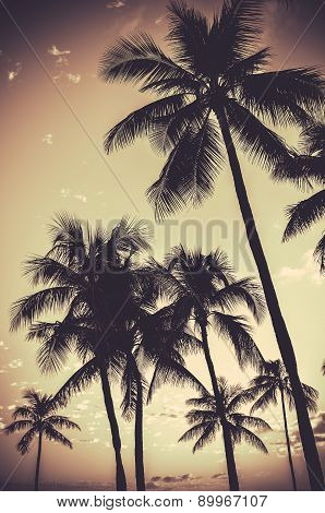 Retro Sepia Palm Trees