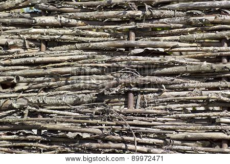 Fragment Of Fence Plexus Branches