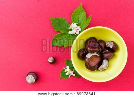 Chestnuts In Yellow Bowl With Leaves And Flowers On Red Background