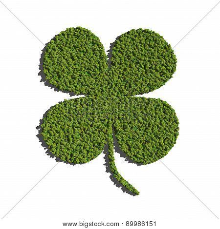 Four Leaf Clover Create By Tree White Background