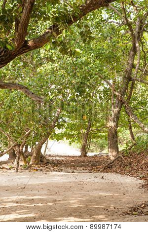 Tropical Sandy Beach With Beautiful Vegetation