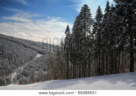 Pine On A Mountain Slope
