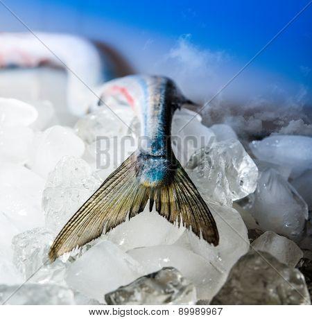 Garfish,belone-belobe Fishtail On The Ice