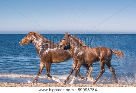 Red Horses