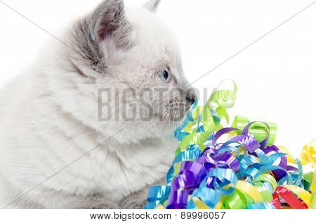Cute Kitten With Ribbons