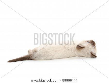 Cute Kitten Laying Down On White