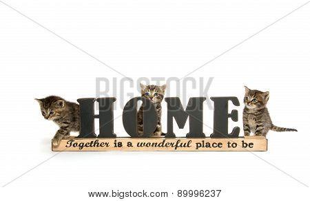 Cute Baby Tabby Kittens